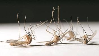 уничтожитель комаров
